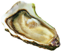 L'huître fine de Bretagne